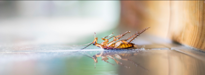 Strategies Of The Best Pest Control In Sydney