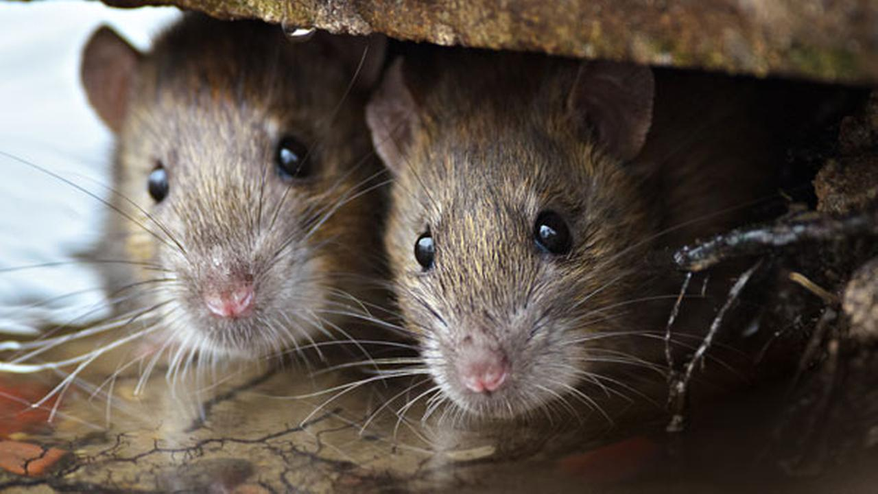 How Pest Control In Nanaimo Works?