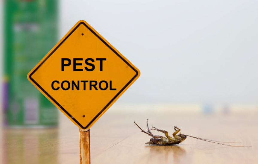 Get A Healthy Environment With The Help Of Pest Control Services