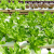 What Hydroponic Supplies You Need For a Productive Garden